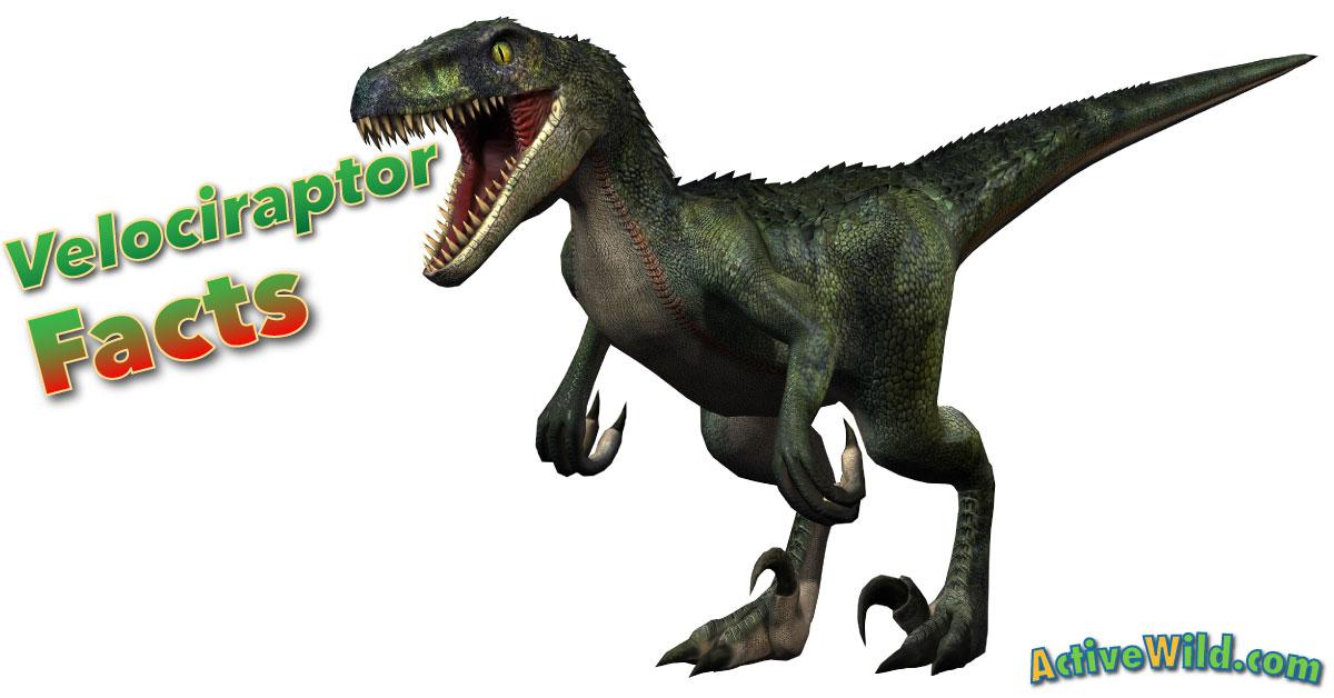 Velociraptor Quick Facts Velociraptor Facts for...