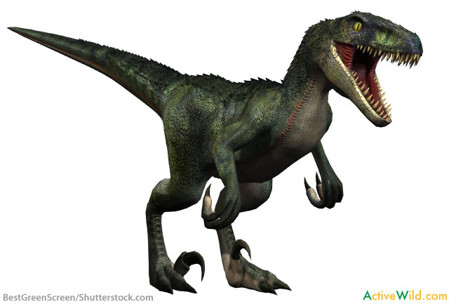 Velociraptor facts for kids students adults with - Dinosaure raptor ...
