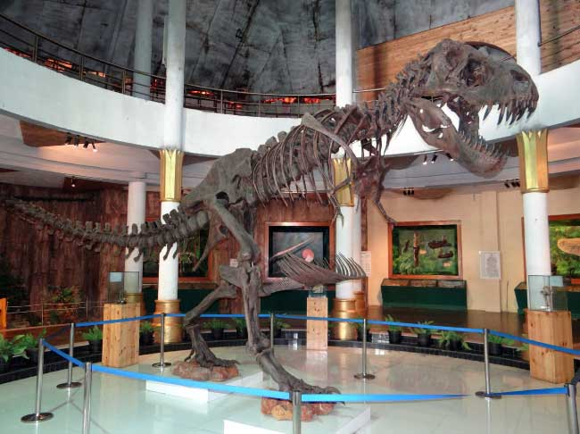 Were Dinosaurs Real? … yup!