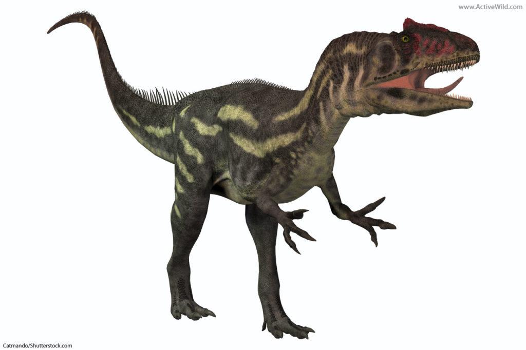 Allosaurus Allosaurid