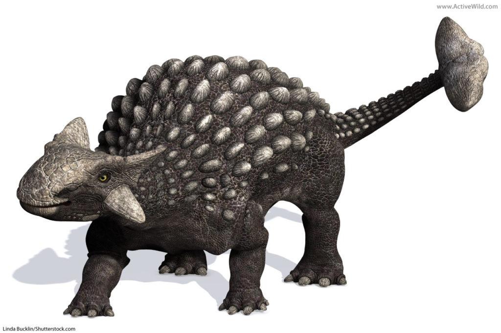 Ankylosaurian types of dinosaur