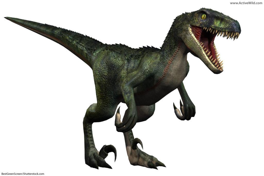 Velociraptor was a dromaeosaurid