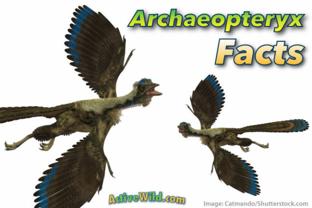 Archaeopteryx Facts for kids