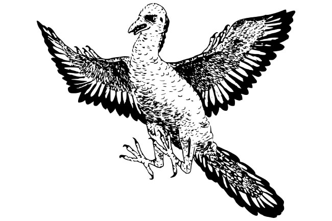 Archaeopteryx Picture