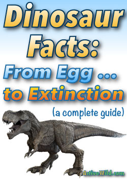 Dinosaur Facts Active Wild
