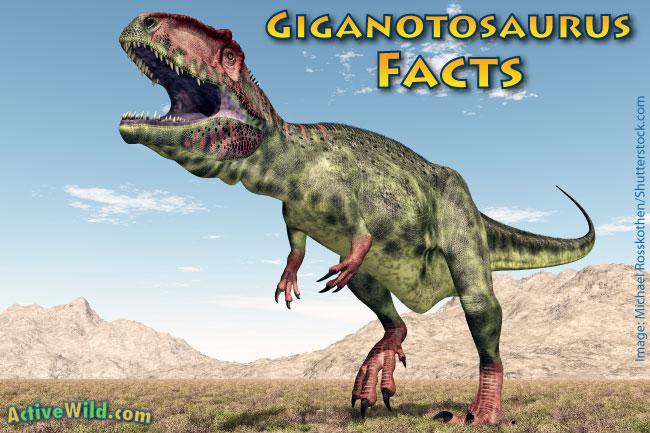 Giganotosaurus Facts for Kids