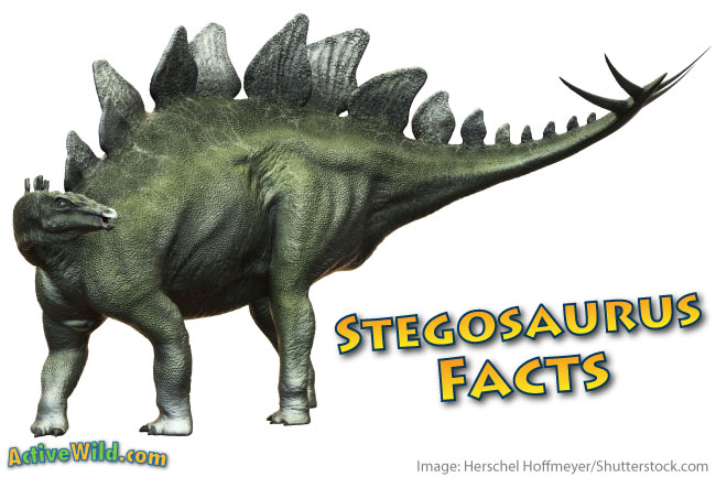 Stegosaurus: A History Just for Kids!