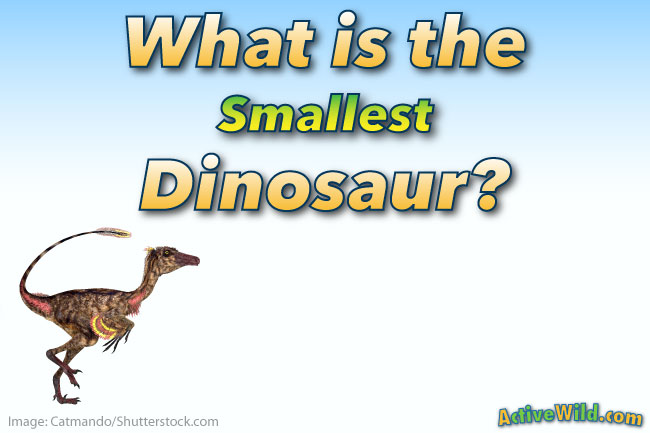 What is the Smallest Dinosaur