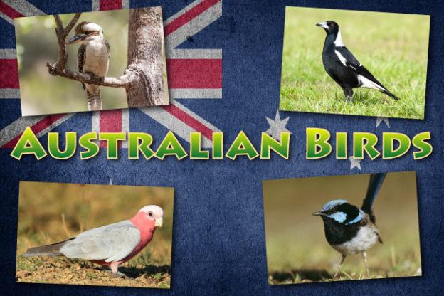 Australian Birds List