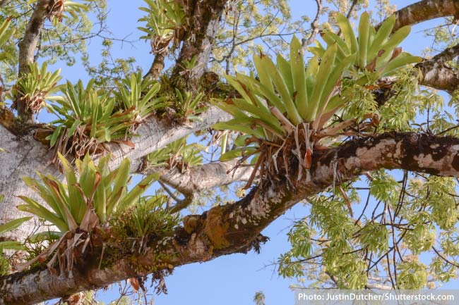 Epiphytes tropical rainforest