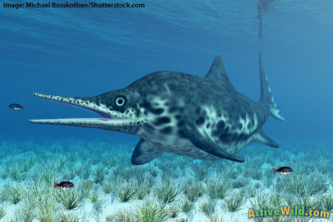 Triassic Animals List Triassic Period Sea An...