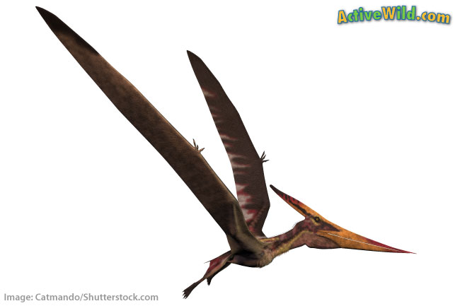 Pteranodon animal that lived at the same time as dinosaurs