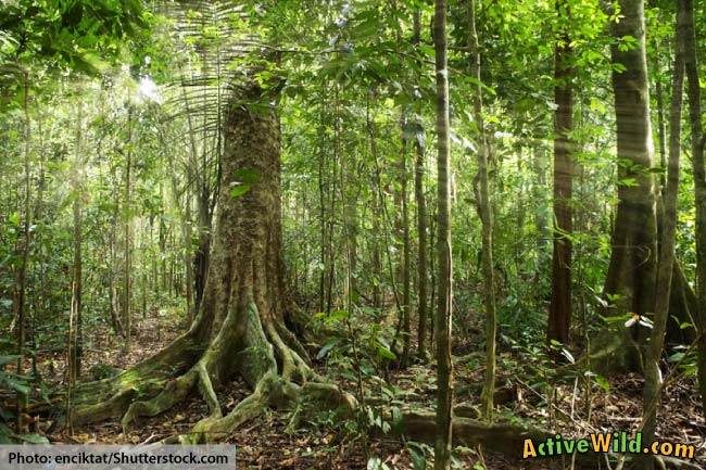 What Is In The Amazon Rainforest