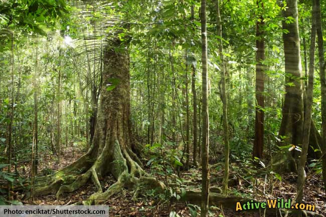 What is a tropical rainforest definition location for Forest floor definition