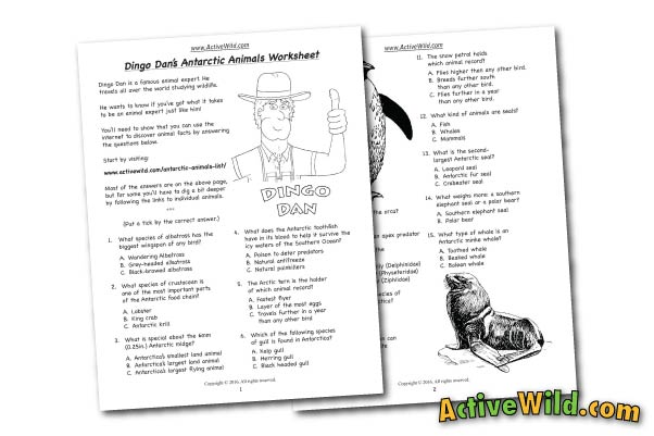 Antarctic Animals Free Printable Worksheet