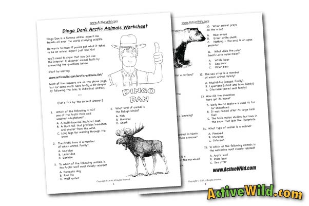 Arctic Animals Free Printable Worksheet