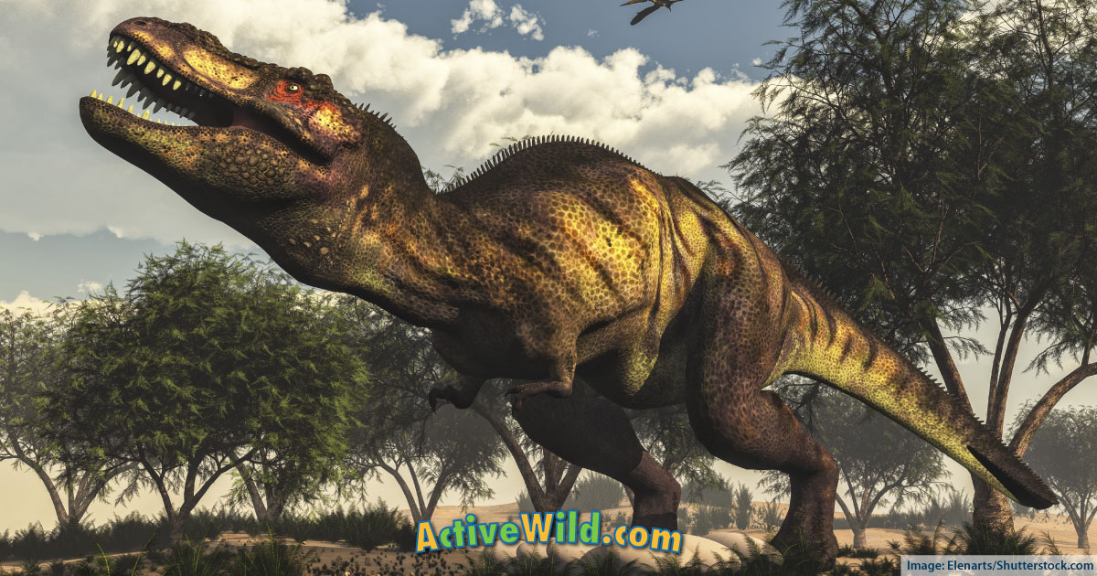 Discover The Different Types Of Dinosaurs With Pictures ...