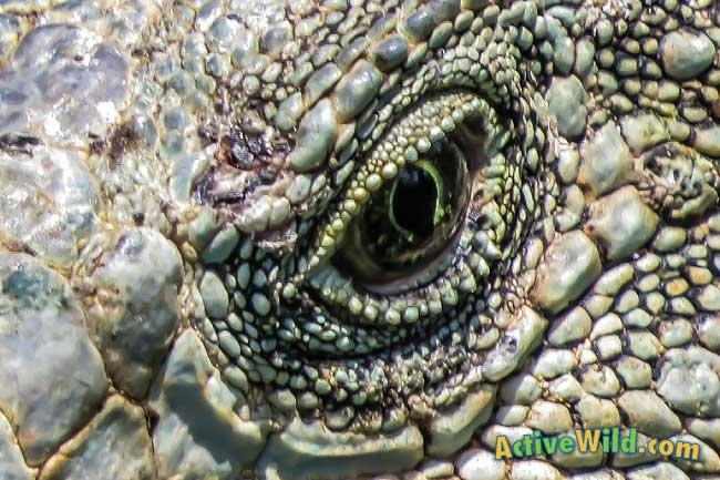 Gorgosaurus Facts for Kids