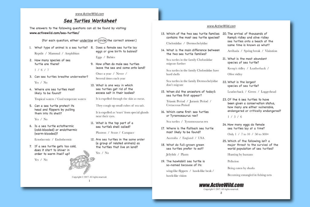 sea turtles printable worksheet