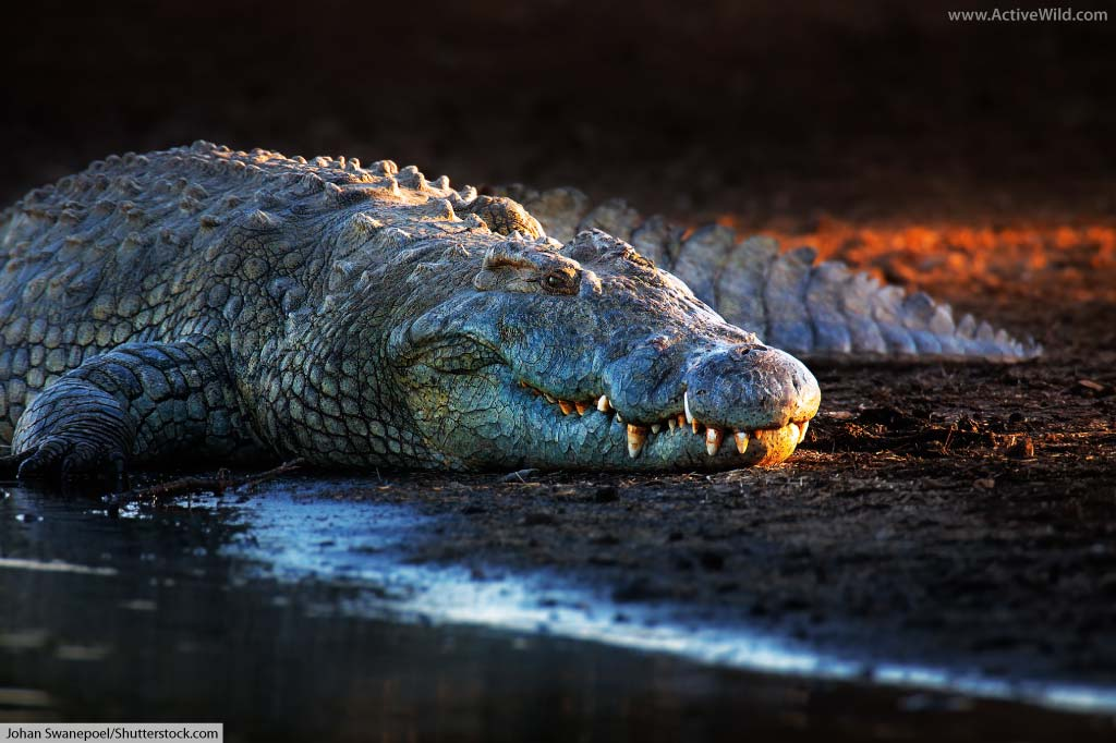 List of Crocodiles in Africa