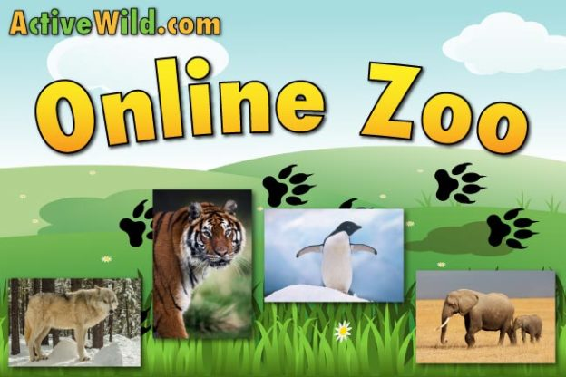 Online Zoo - Virtual Zoo for kids and adults