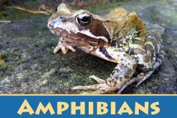 Online Zoo Amphibians