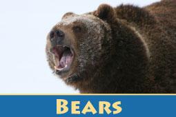 Online Zoo Bears