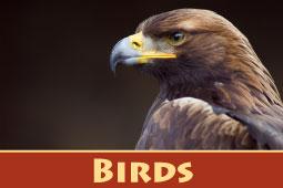 Online Zoo Birds