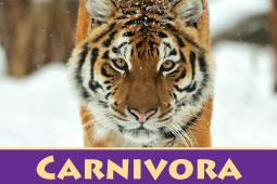 Virtual Zoo Carnivora