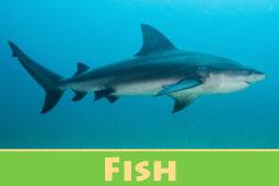 Online Zoo Fish