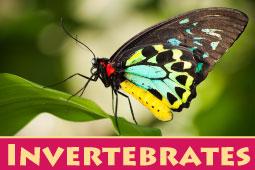 Online Zoo Invertebrates