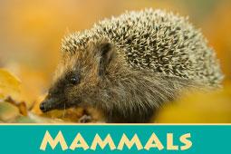 Online Zoo Mammals
