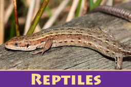 Online Zoo Reptiles