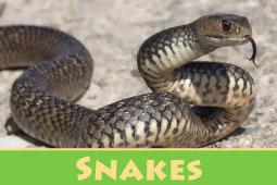 Virtual Zoo Snakes
