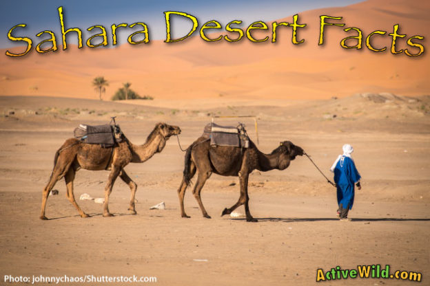 Sahara Desert Facts For Kids