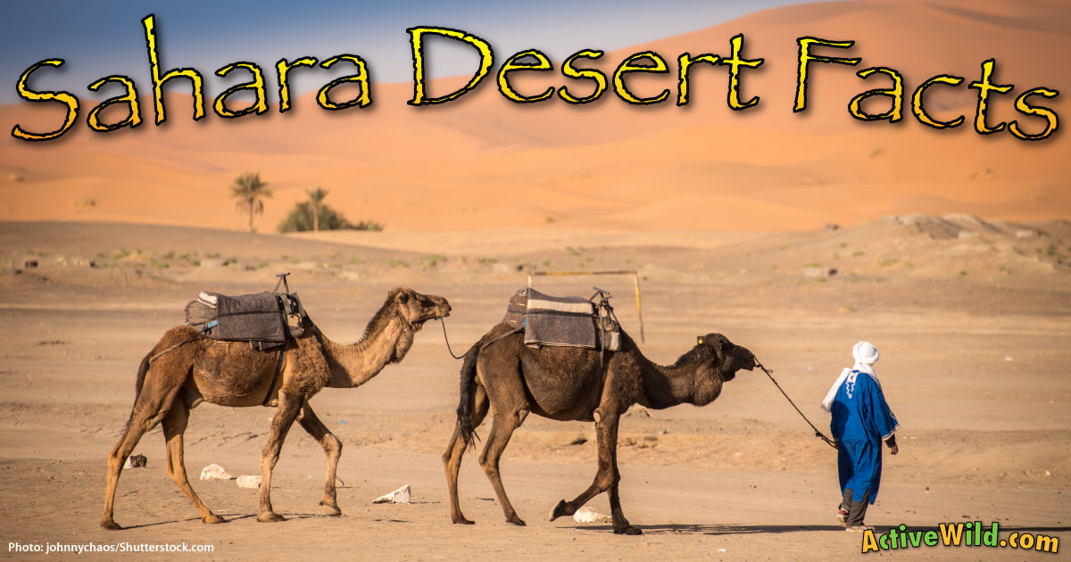 Sahara Desert Facts For Kids  Students Pictures Information  Video
