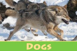 Virtual Zoo Dogs