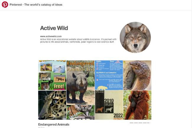 Active Wild Pinterest Board