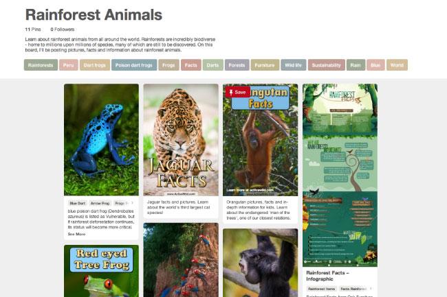 Active Wild Rainforest Pinterest