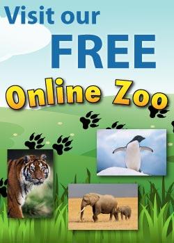 Online Zoo