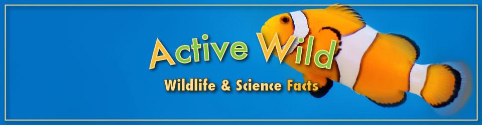 Active Wild