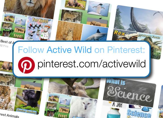 Active Wild Pinterest