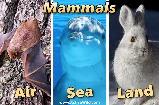 Air Sea Land Mammals