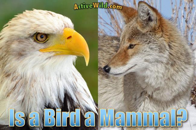mammals characteristics pdf