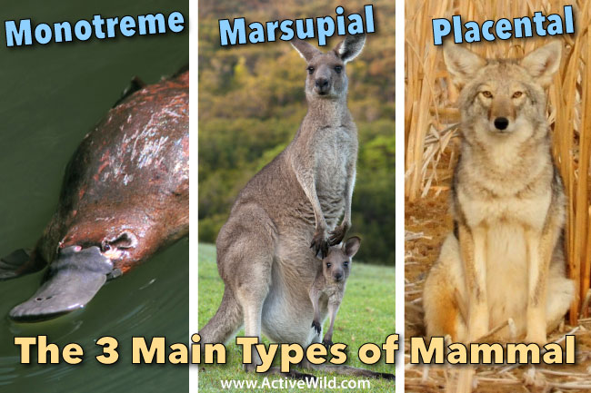Types Of Mammals Pictures Facts Learn About The Main Mammal