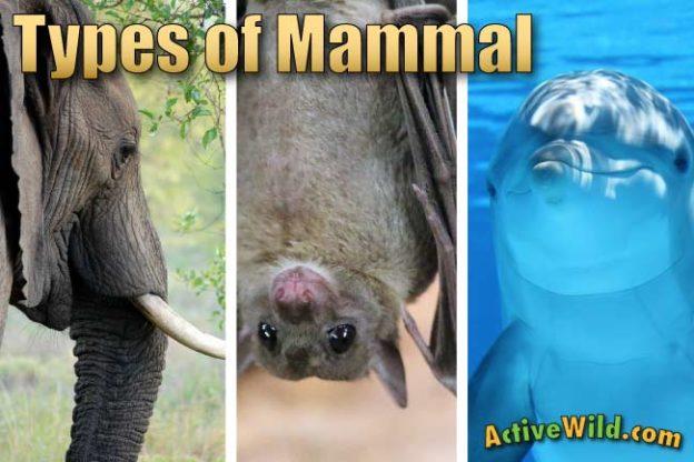 Types Of Mammals