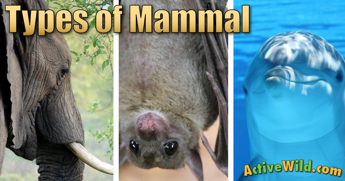 Types Of Mammals: Pictures & Facts Learn About The Main Mammal Groups & How Different Mammals