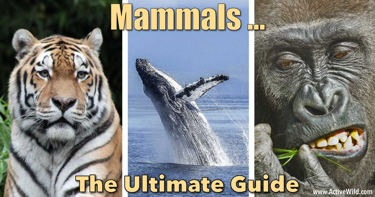 What Is A Mammal? Mamm...
