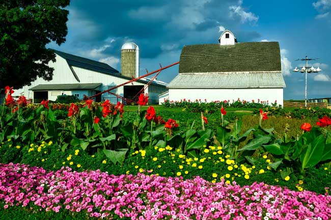 Iowa Farmhouse Flowers