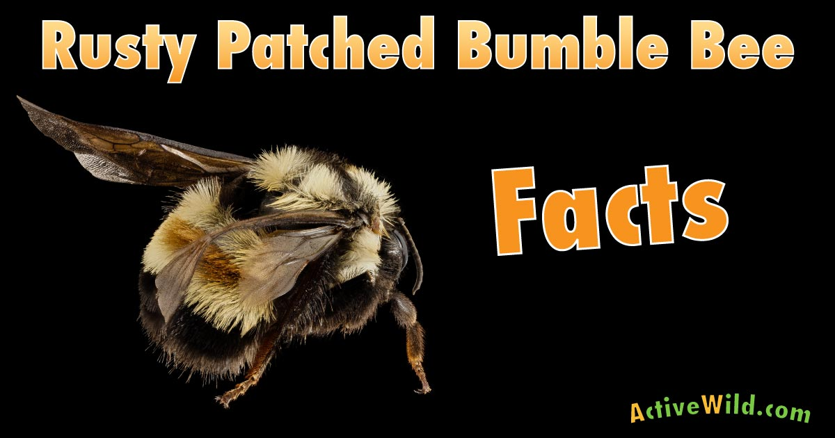 Rusty Patched Bumble Bee Facts on Printable Zoo Worksheets Animals